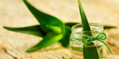 bahan herbal untuk kecantikan